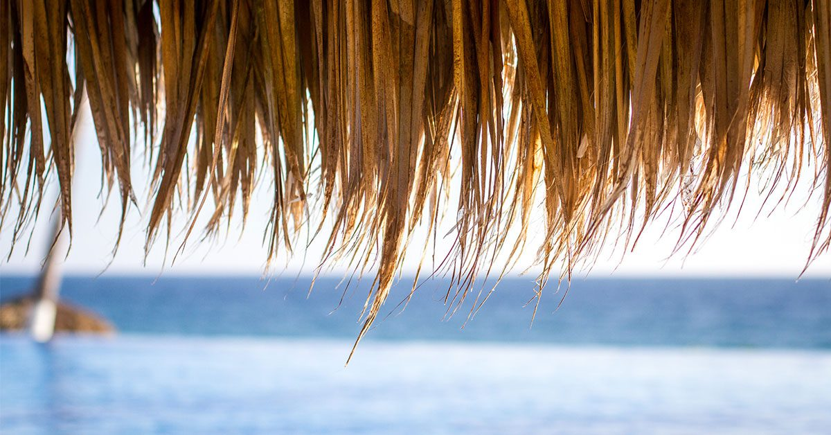 Under a Palapa roof looking out at the ocean
